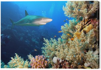 Podwodne zdjęcia rafy koralowej z rekina i nurków
