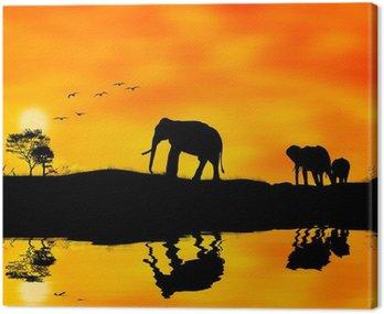 Elefanti afryka