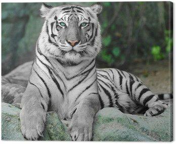 Biały tygrys na skale w zoo