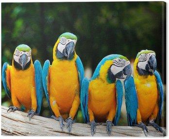 Kolorowe cztery ara siedzi na drzewie