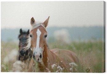 Konie w polu
