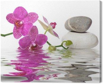 Einfach schöne Orchideen