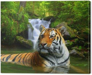 Tygrys syberyjski w wodzie