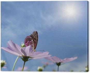 Motyl na stokrotka.
