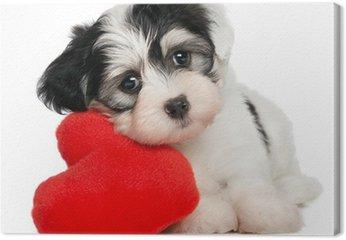 Lover Valentine Hawańczyk puppy z czerwonym sercem
