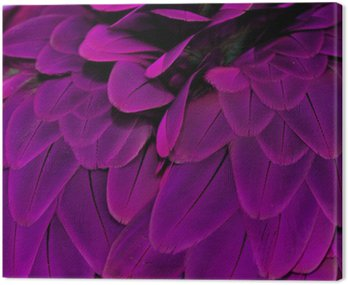 Feathers; Purple
