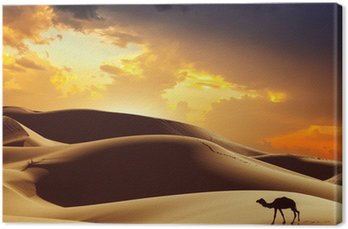 Camel na Saharze, Maroko