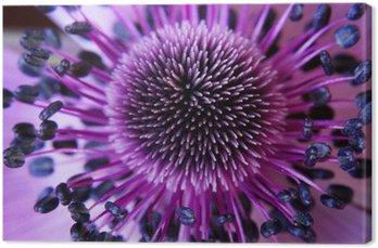 Anamone kwiat