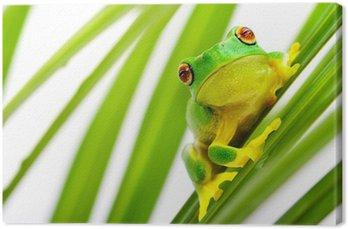 Zielona żaba drzewo na palmy