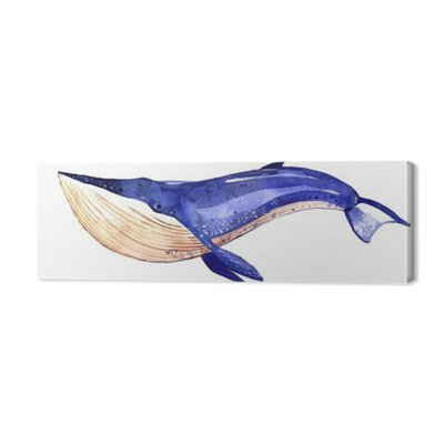 watercolor whale, hand painted illustration isolated on white background