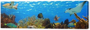 Podwodne panoramy z tropikalnej rafy na Karaibach