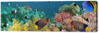 Podwodne panoramy z angel ryby, rafa koralowa i ryby. czerwony