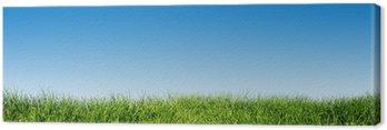 Zielona trawa na błękitne niebo jasne, wiosna motyw natury. Panorama