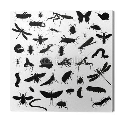 Kolekcja silhouettes owadów