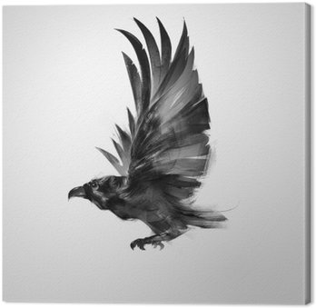 Izolowane graficznie latający ptak czarna wrona
