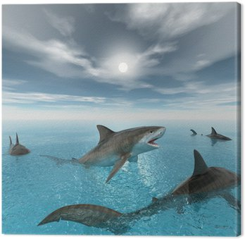 Tiger shark swimming
