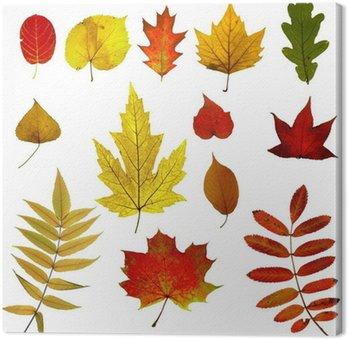 Jesienne liście kolekcję