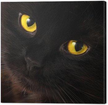 Czarny kot patrzy na ciebie z jasne żółte oczy
