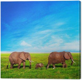 Słonie rodzina na sawannie. Safari w Amboseli, Kenia, Afryka
