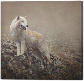 Biały wilk w nocy