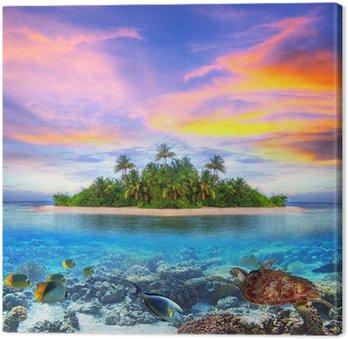 Tropikalna wyspa Malediwów z życia morskiego