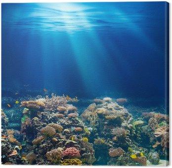 Morskiego lub oceanu podwodna rafa koralowa z rurką lub akwalungiem backgrou