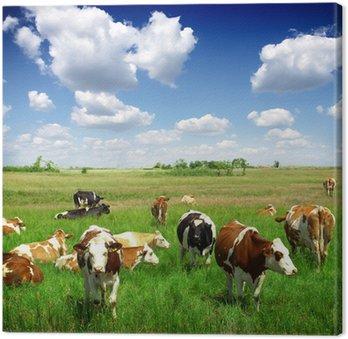 Krowy na łąki letnim zielony