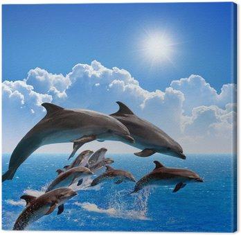 Delfiny skoków