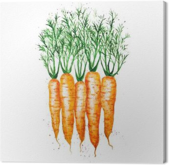 Vector watercolor carrots, isolated on white background