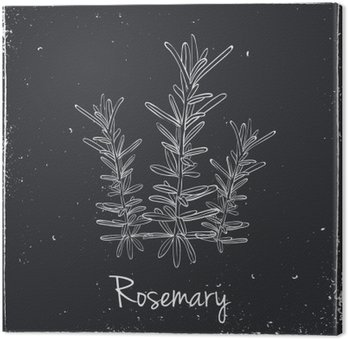Rosemary Herbs and Spices.