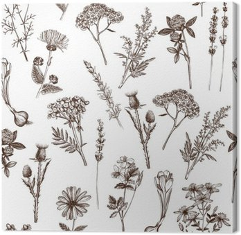 vector seamless pattern with ink hand drawn medicinal herbs sketch