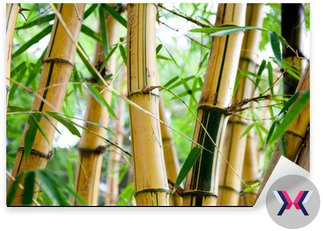 Bambusowy las
